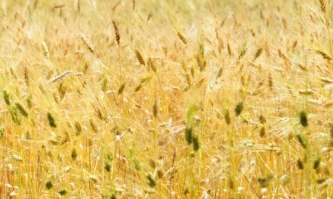 ナヴダーニャ農園