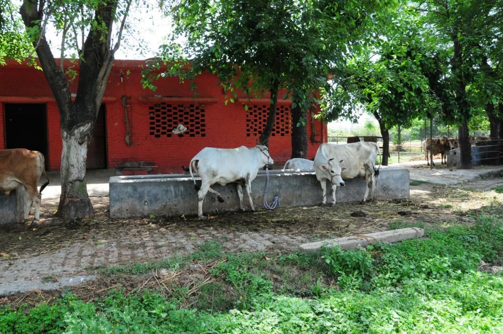 ナヴダーニャ農園画像